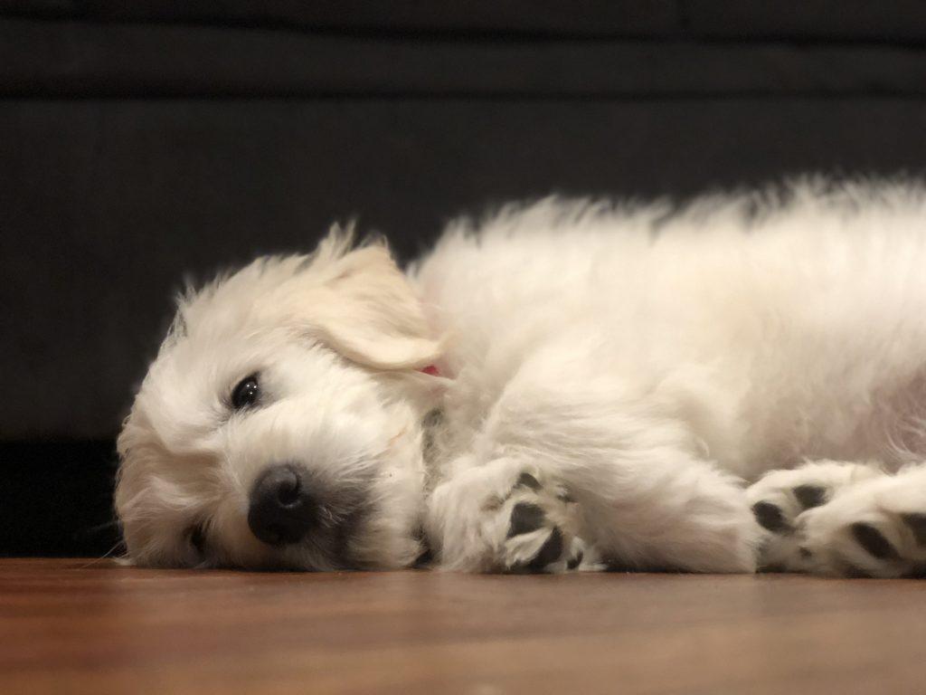 sleeping dogmy image